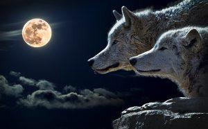 満月の夜の寄生虫