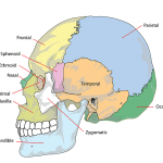 頭蓋骨の歪み