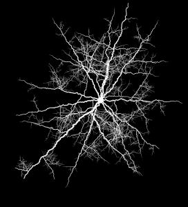 ヘルペス脳炎で不安症