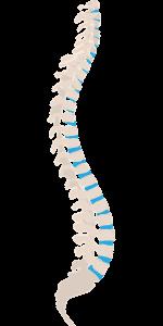 首の痛みの原因が椎間板