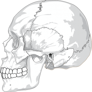 頭蓋骨の歪み(クラニオ)